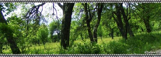 Purcaret-De-a lungu satului-foto1