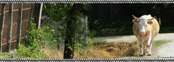 Purcaret-De-a lungu satului-foto2