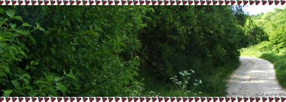 Valisoara-De-a lungu satului-Foto2